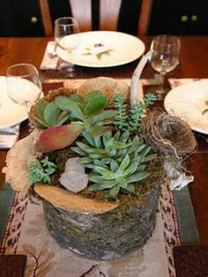succulents in a wood stump