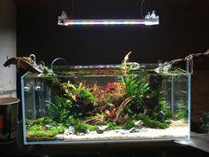 Aqua Pools, Nano Cube, Aquarium Ideas, Fish Tanks, Aquascaping, Freshwater Aquarium, Scp, High Contrast, Conception