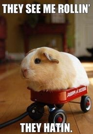 I wanted to show you how I have already lost 24 pounds from a new natural weight loss product and want others to benefit aswell.trying to catch me riding gerb-y. Im a hamster not a gerb-y. Im a hamster not a gerby. Im a hamster NOT A GERB-Y. Funny Animal Memes, Funny Animal Pictures, Funny Animals, Cute Animals, Hilarious Memes, Animal Quotes, Small Animals, Funniest Memes, Animal Captions