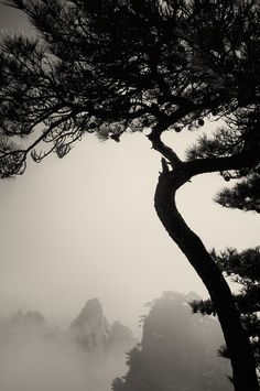 黄山一棵松 2012
