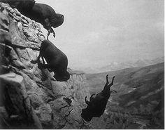 Falling Buffalo by David Wojnarowicz