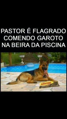 Cão comendo garoto na piscina….credo!!! q engraçado