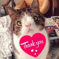 ★ You are so PAWsome ★ The latest bid on my charity auction is $90. Me Monty cat is so grateful. Your help will be used to help the dogs and cats in the streets of Greece. And they really need help