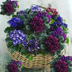 930 Likes, 10 Comments - Flowers & plants beautiful (@mohammadplant_samadpoor) on Instagram
