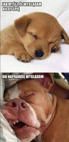 Funny Pictures, Funny Pics, Funny Shirts, Labrador Retriever, Haha, Humor, Cool Stuff, Memes, Animals