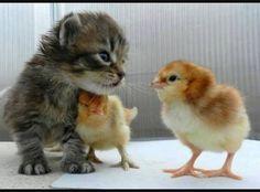 """This is my friend."" http://ift.tt/2jNqcwS"