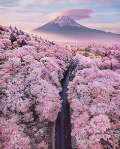 Truly Astounding Places To Visit In Japan Mt Fuji overlooking a sea of blossom trees - Japan - 15 Truly Astounding Places To Visit In Japan.Mt Fuji overlooking a sea of blossom trees - Japan - 15 Truly Astounding Places To Visit In Japan. Cherry Blossom Japan, Cherry Blossom Season, Japanese Cherry Blossoms, Japanese Blossom, Nature Aesthetic, Travel Aesthetic, Aesthetic Japan, Natur Wallpaper, Wallpaper Rosa