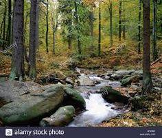 Bachlauf Im Herbstwald ile ilgili görsel sonucu