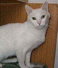 Gato Pocillo. Es un superviviente. Animals, Kittens For Adoption, Foot Prints, Gatos, Animales, Animaux, Animal, Animais