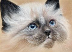 Siamese Kitten Pastel Painting by Colin Bradley using Pastel Pencils. Learn to draw Animal Pictures with Colin's lessons: https://www.colinbradleyart.com/home/draw-these-animals-using-pastel-pencils/ #PastelPencils #PastelArt #ColinBradleyArt #siamesekitten