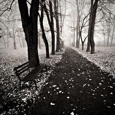 I feel like Hemingway walked this path. Desolate and beautiful.