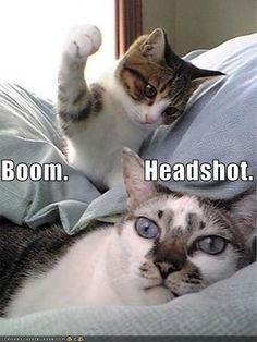 boom. This is what my cat Mick does except to my head when I am sleeping.