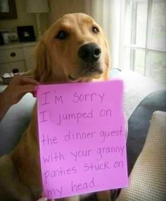 Absolutely Hilarious Dogshaming Signs - dog shaming, dogshaming I'm sorry i jumped on the dinner guest with your granny panties stuck on my head.I'm sorry i jumped on the dinner guest with your granny panties stuck on my head. Funny Animal Pictures, Funny Animals, Funny Photos, Funny Images, Animal Pics, Animal Quotes, Dog Quotes, Wierd Pictures, Funniest Photos