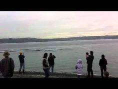 These Orcas are amazing!! This was filmed over on Vashon Island, WA