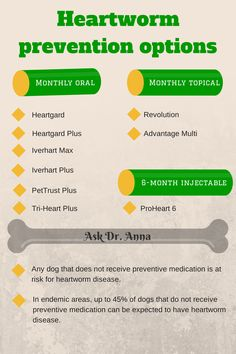 basics heartworm disease