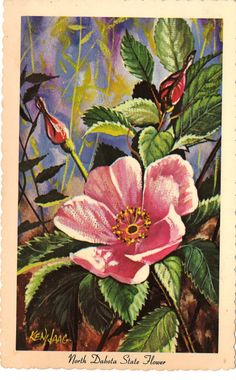 North Dakota State Flower Postcard by Ken Haag Prairie Rose by heritagepostcards, $2.75