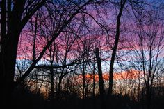 Backyard photo at sunset. March 2012. by Cheryl Royster