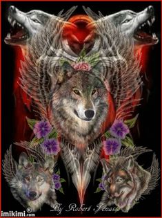 In der Galerie - Wolf - Wolf Images, Wolf Photos, Wolf Pictures, Beautiful Wolves, Animals Beautiful, Cute Animals, Wolf Craft, Native American Wolf, Wolf Artwork
