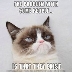 Grumpy Cat. Problem with some people.