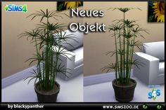 Cyperus plant http://simszoo.de/include.php?path=download&contentid=52086