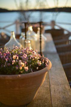 Vårbruk i trädgården | Zetas Trädgård