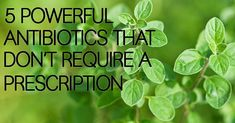 5 powerful antibiotics that don't require a prescription - Healthy Holistic Living