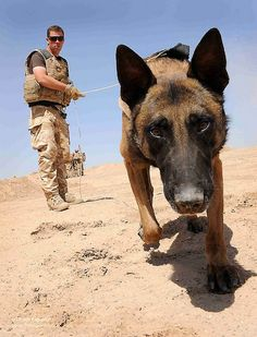 An Army dog handler during an IED search exercise near Camp Bastion, Afghanistan.   Both are heroes!
