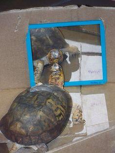 Who's the fairest tortoise of all? #DIY - PetDIYs.com