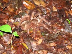 Suriname. Spiders in the Amazon rainforest.