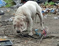 Chained dog rescued after suffering four long years living in filthy trash pile-slide0