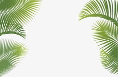 Leaf background,advertising,Palm tree,leaf vector,background vector,Leaf clipart,background clipart