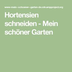 Hortensien schneiden - Mein schöner Garten