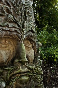 face in a tree with green tinting.