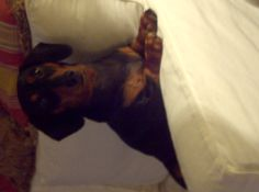 My doggy Tota and any other doggies in general : )