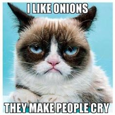 #GrumpyCat #meme Grumpy Cat stuff, gifts, coupons, meme on www.pinterest.com/erikakaisersot