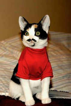 """Her name is """"Mustache"""""""