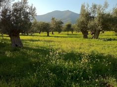 Ogrody greckie cechowała użytkowość i prostota. Uprawiano drzewa owocowe, zakładano winnice i warzywniki, z których część zbiorów przeznaczano na ofiary dla bogów. Hodowano również kwiaty, które stanowiły oprawę uroczystości.