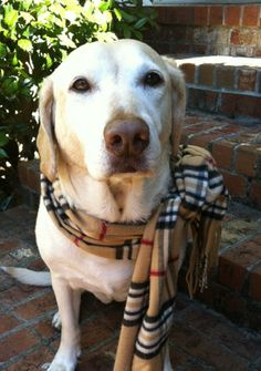 I couldn't resist the fall scarf..so cute