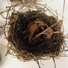 Lost Found Art - Birds Nests