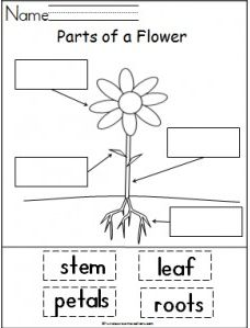 parts of a plant cut out worksheet