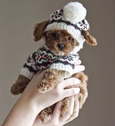 Animal sweaters ( because Winter is coming)