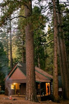 Cabin surrounded by towering sugar pine trees