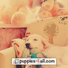 Find your puppy here: http://puppies4all.com/ #dog #cute #puppy