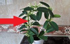 Dejte si do bytu tuto rostlinu a na osvěžovače vzduchu můžete zapomenout! Nature, Plants, Lawn And Garden, Raffaello, Flora, Plant, The Great Outdoors, Mother Nature, Planting