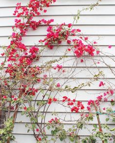 gorgeous flowers everywhere you look | san fran travel guide | la petite farmhouse