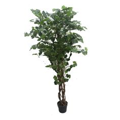 Jeco Artificial Silk Potted Ginkgo Tree for sale online Topiary Plants, Ivy Plants, Topiary Trees, Potted Trees, Potted Plants, Boxwood Tree, Ficus Tree, Boxwood Topiary, Palm Plant