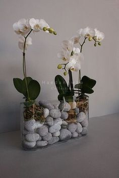 Phalaenopsis Orchid Care For Beginners (Easy Guide Indoor Orchids, Orchids Garden, Indoor Plants, Orchid Terrarium, Orchid Planters, Orchid Flower Arrangements, Flower Vases, Exotic Flowers, Beautiful Flowers