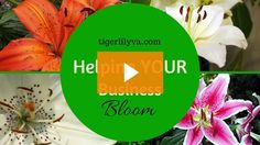 How to Create Canva Presentations for SlideShare [Video] | Tigerlily Virtual Assistance | Helping your business BLOOM!
