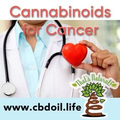 "Non-psychoactive cannabinoids like CBD may have therapeutic effects for cancer even beyond their use to treat side-effects of chemotherapy.  From the abstract:   ""Our overall findings support the concept that cannabidiol, which lacks psychotropic activity, may possess anti-inflammatory property and down regulates both cannabinoid receptors, PSA, VEGF, IL-6 and IL-8.....This activity may contribute to its anticancer and chemosensitizing effect against prostate cancer. Cannabidiol and other…"