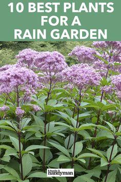 10 Best Plants for a Rain Garden Lawn And Garden, Water Garden, Garden Beds, Garden Plants, Landscaping With Rocks, Backyard Landscaping, Rain Garden Design, Unique Garden, West Facing Garden